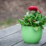 """Weź udział w akcji """"Wymiana roślin"""" – wymień się sadzonkami i roślinami z własnych upraw!"""