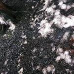 Ktoś truje wiewiórki w Parku Lotników?