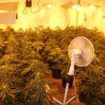 Pod Krakowem zlikwidowano sporą plantację marihuany. Ale to nie wszystko…(zdjęcia)