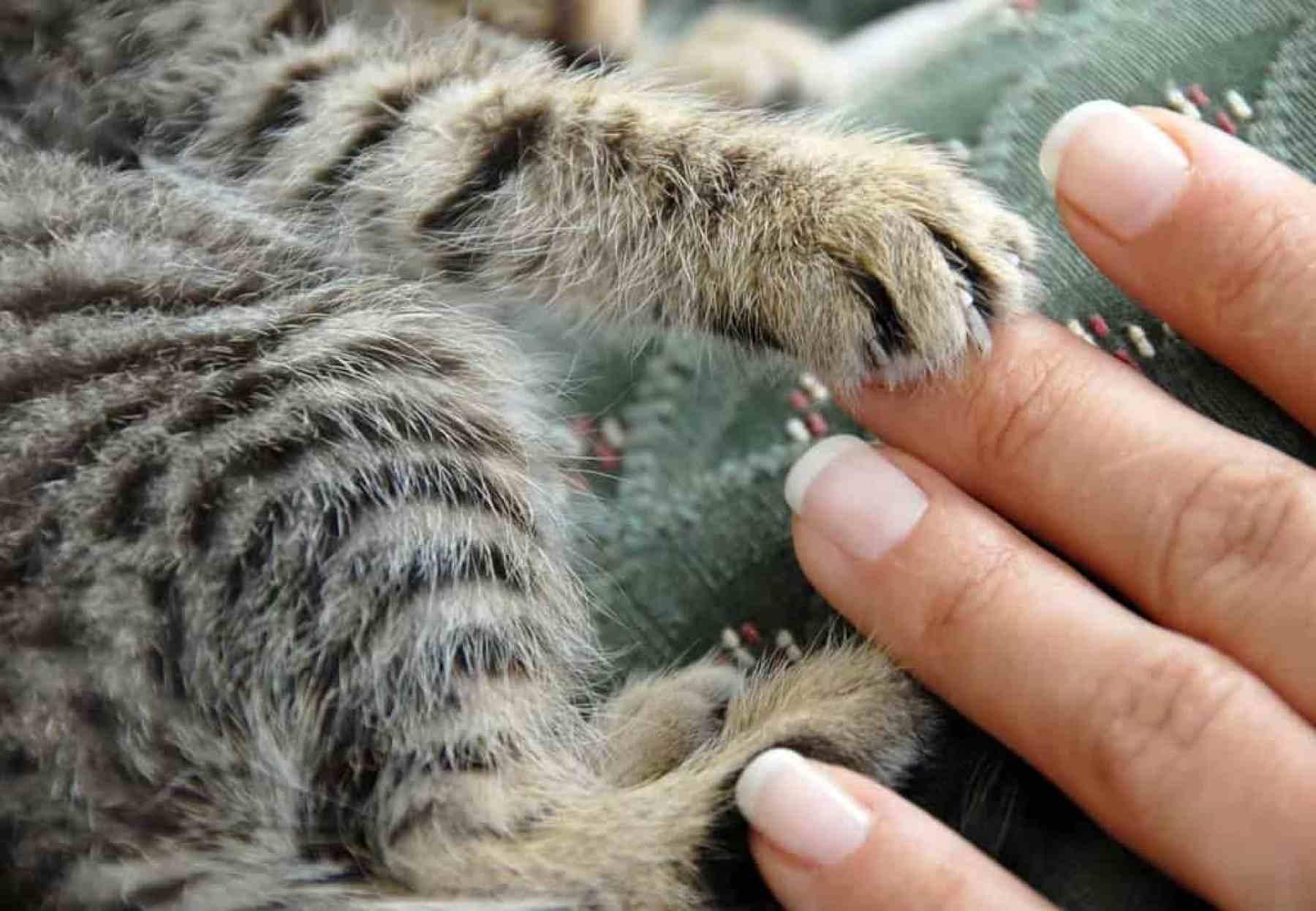 Białaczka u kota FeLV. Jak uchronić przed nią kociaka