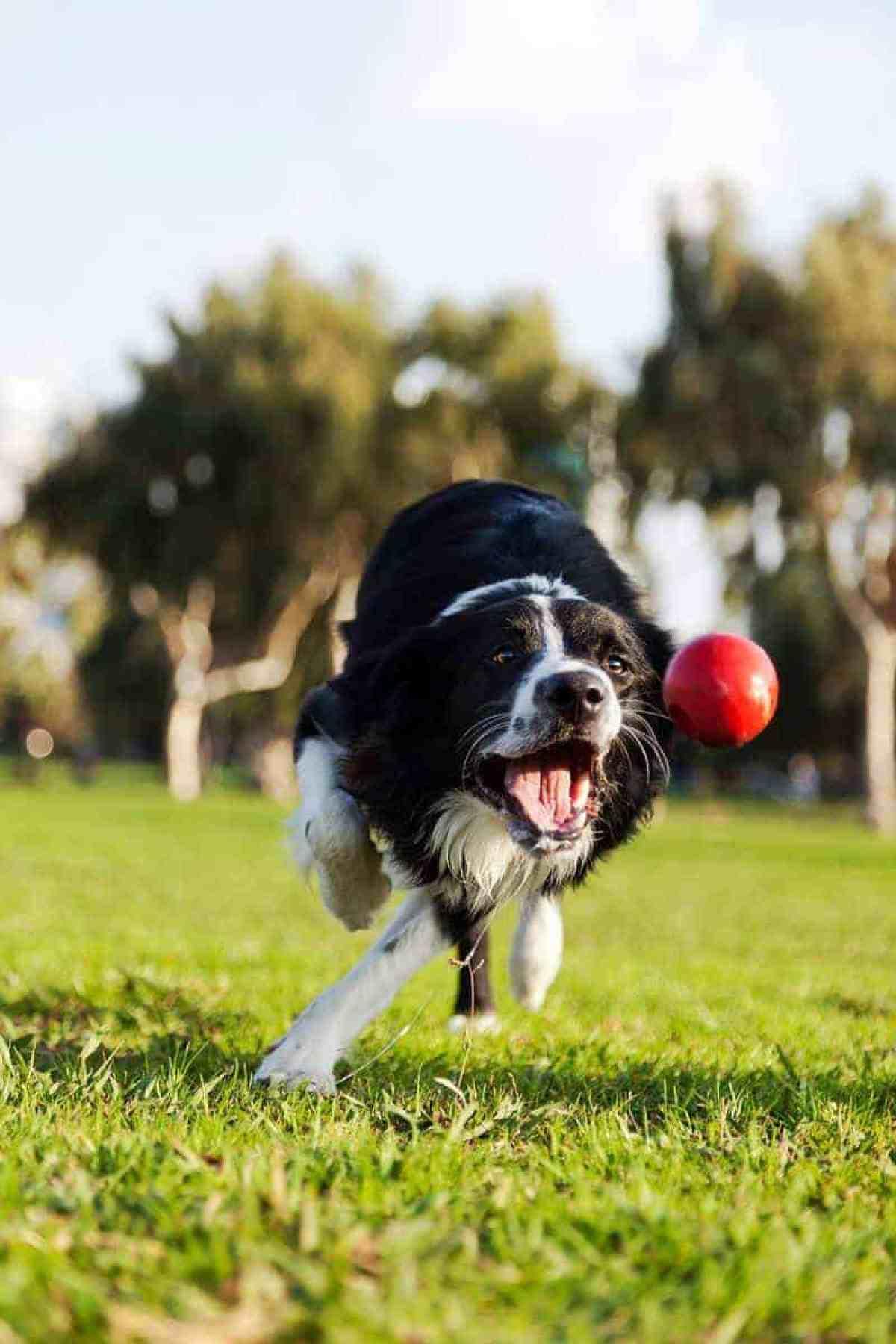 Spacery i aktywność psa podczas upałów