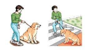 Częste siadanie psa, niechęć do chodzenia po schodach