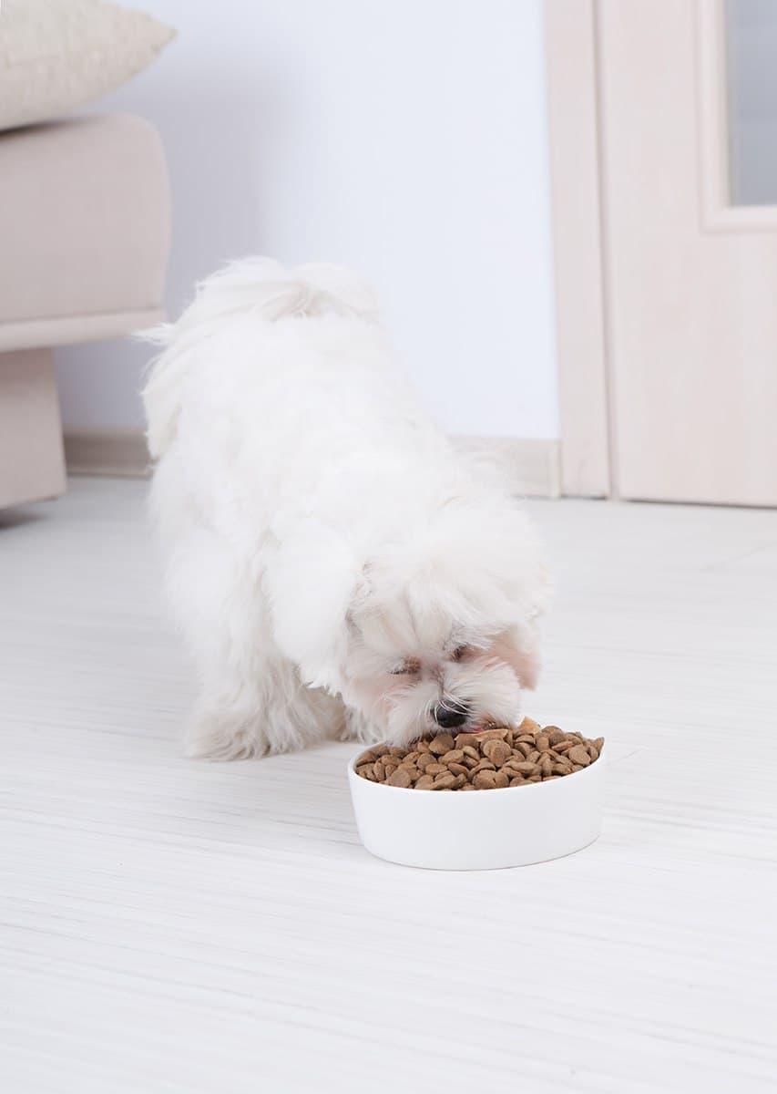 Karma weterynaryjna dla psa z nadwagą