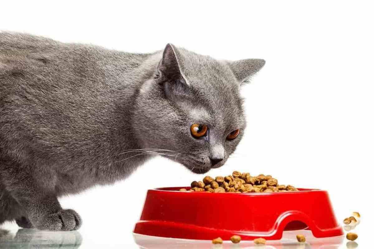 Karma dla kota chorego na nerki