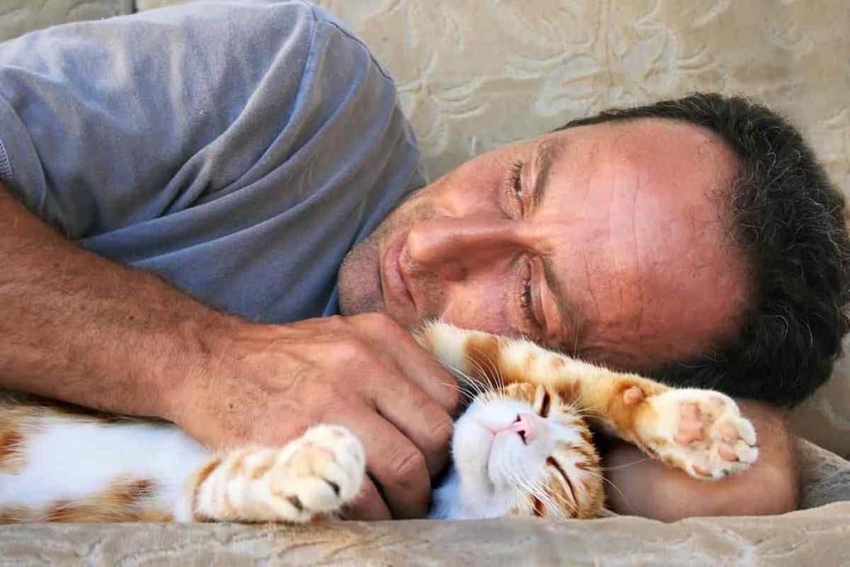 Stłuszczenie wątroby u kota jest poważnym schorzeniem, którego nie wolno zbagatelizować