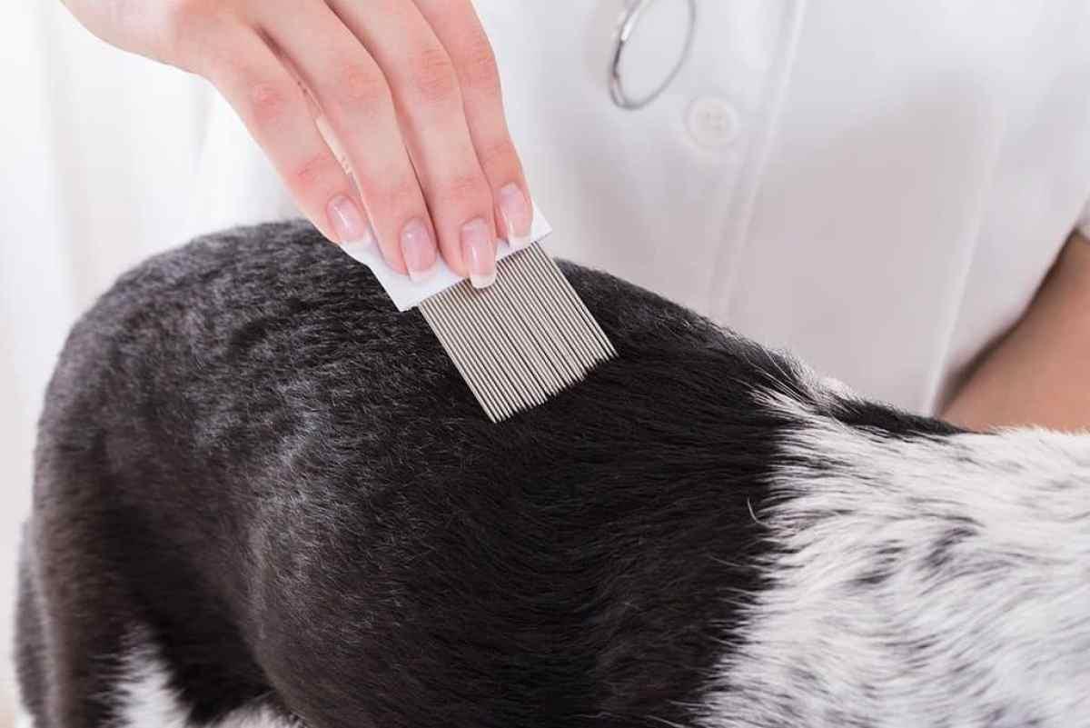 Co ile czesać psa?