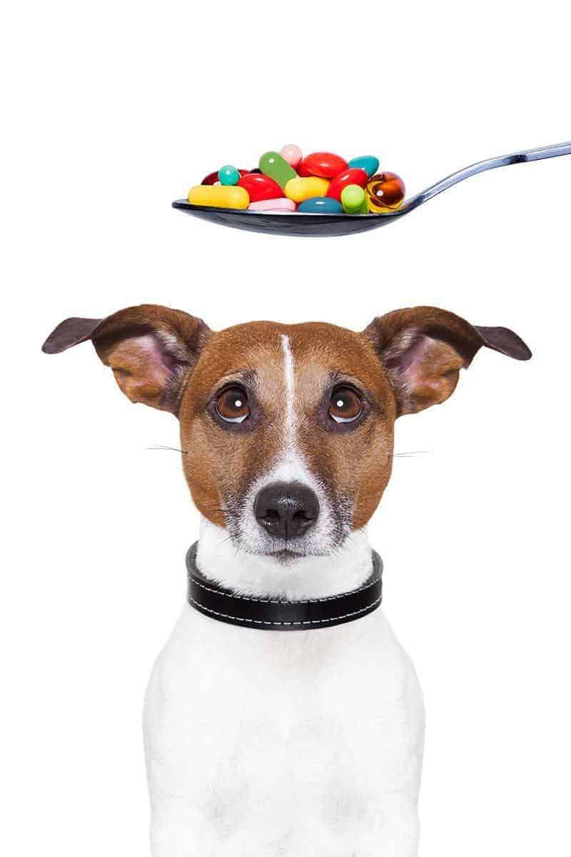 Leczenie łupieżu u psa domowymi sposobami