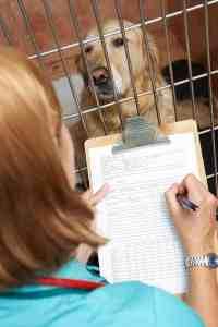 19 chorób przenoszonych przez psy: która choroba od psa jest najgroźniejsza?