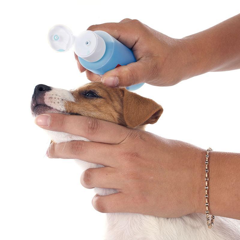 Szampon na łupież dla psa