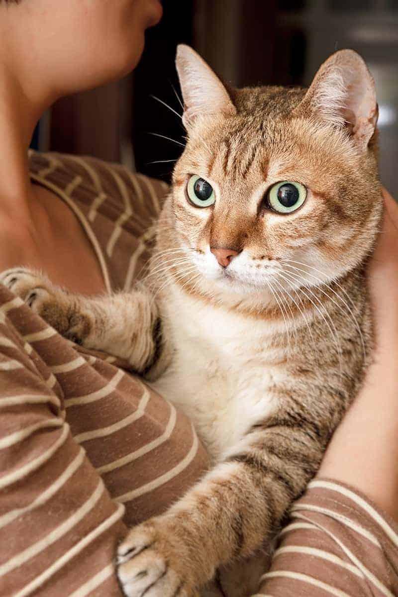 Jak można wydłużyć życie kota?