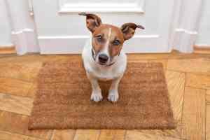 Lęk separacyjny u psa: co robić i jak go pokonać?