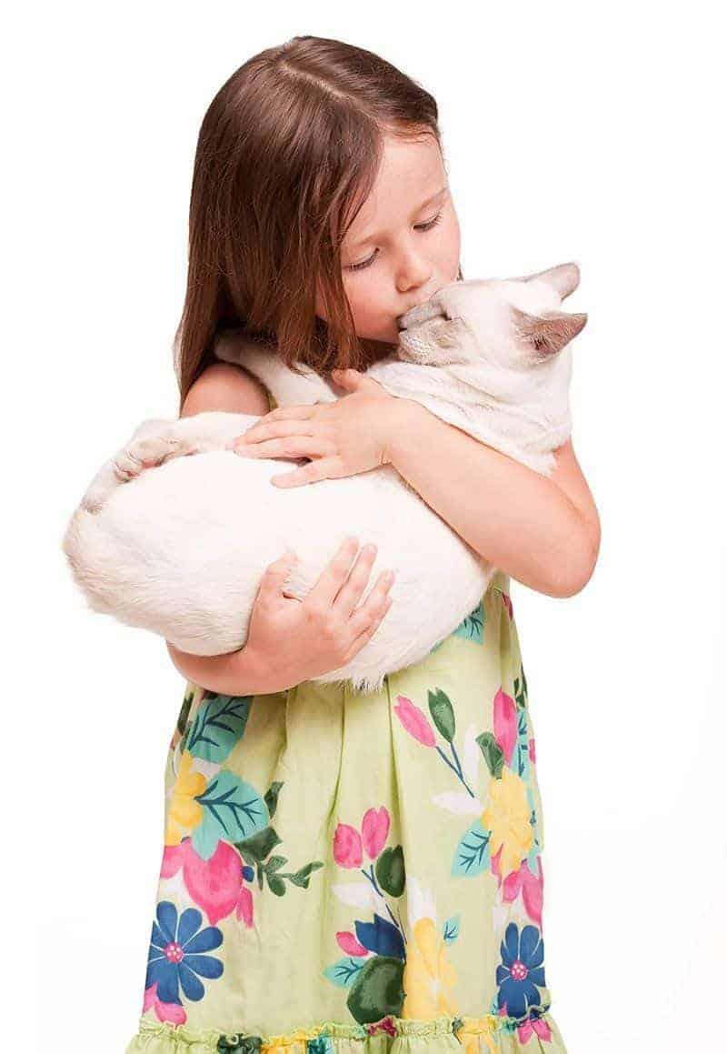 Które koty są najbardziej narażone na nadczynność tarczycy?