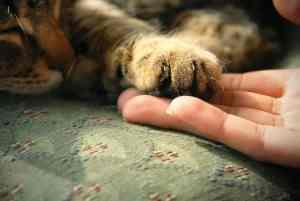 Pierwsza pomoc u kota: co zrobić krok po kroku [przykłady] [infografika]