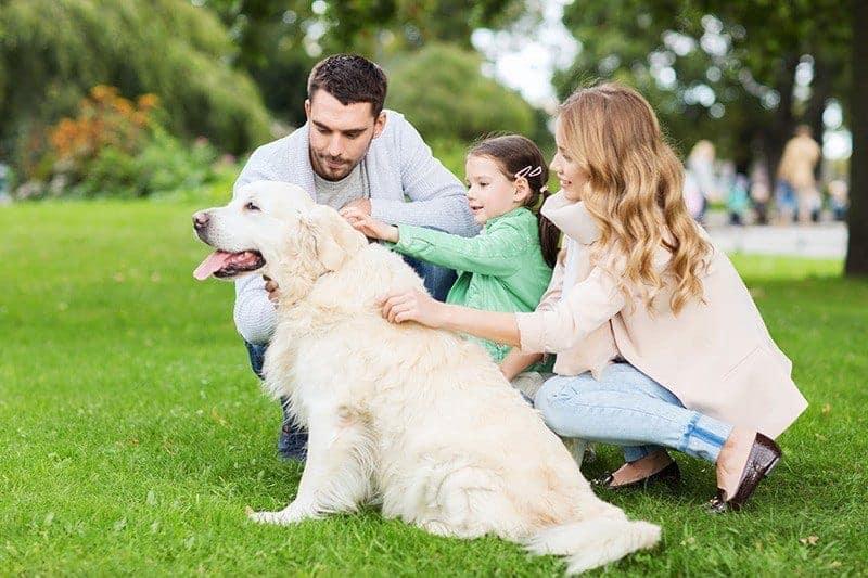 Labrador retriever usposobienie