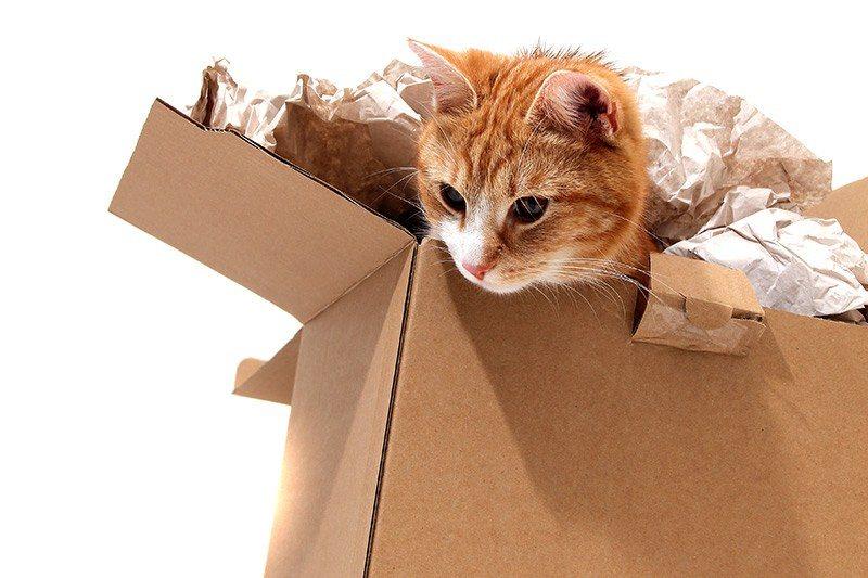 Udało się oswoić kota? Jak wzmocnić tą więź?
