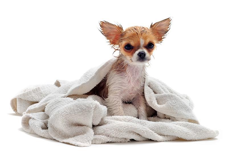 Szampon antybakteryjny dla psa