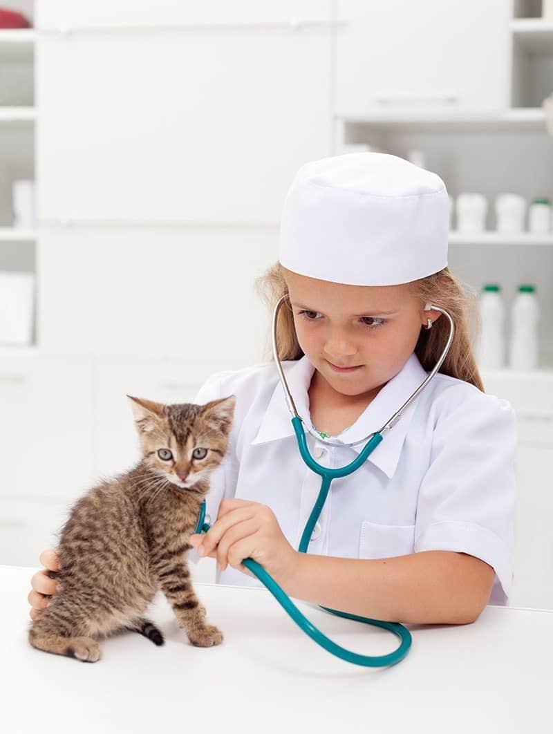Jak przygotować kota na pojawienie się dziecka?