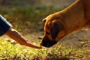 Chora wątroba u psa i kota: objawy i leczenie chorób wątroby