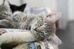 Drugi kot w domu: czy warto zdecydować się na kolejnego kota?