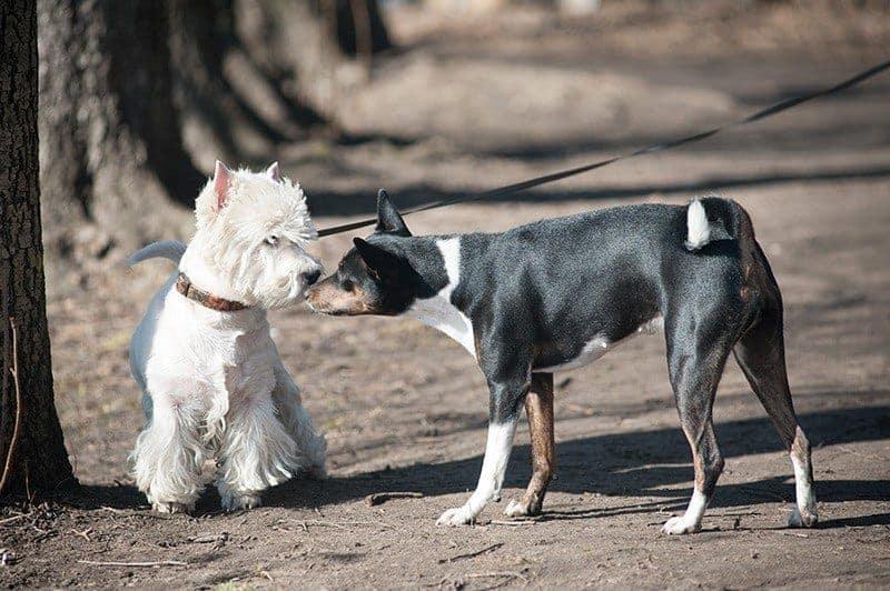 Nie pozwól psu biegać samopas