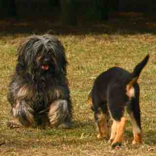 Dlaczego pies zjada odchody