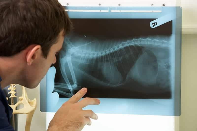 Wzdęcia u psa diagnostyka