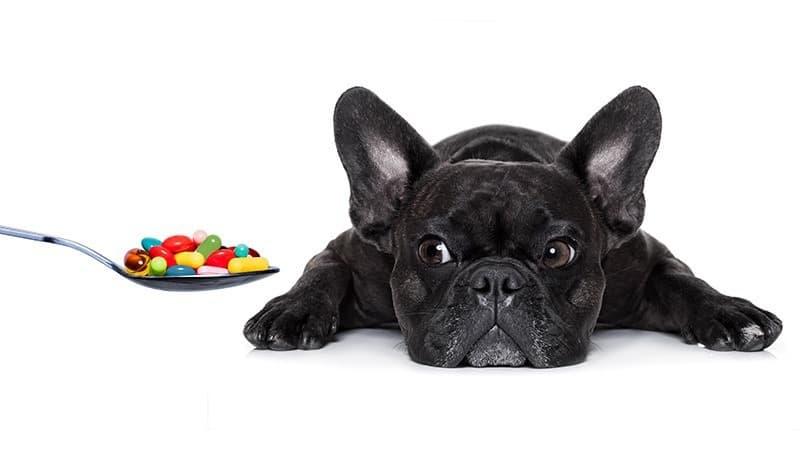 Bakteryjne zapalenie płuc u psa leczenie