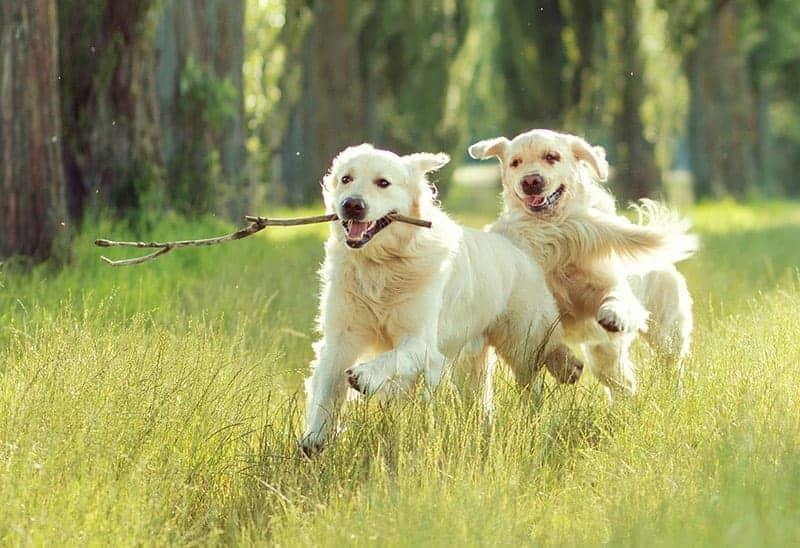 Zapewnij zwierzęciu odpowiednią ilość ruchu
