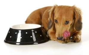 Karma dla psa: jak wybrać karmę dla szczeniaka, dorosłego psa i seniora?