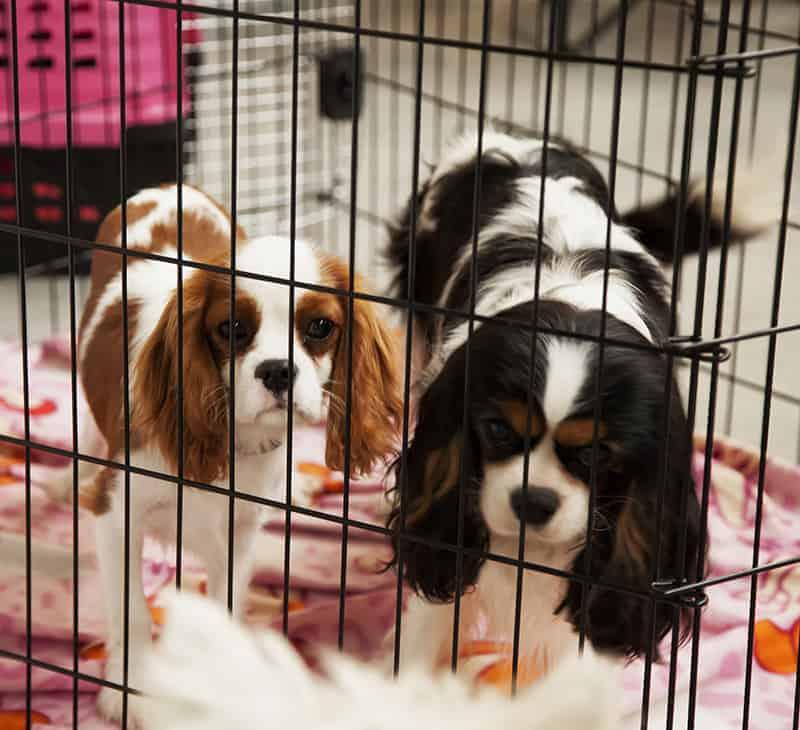 Koniecznie sprawdź warunki w hotelu dla psów!