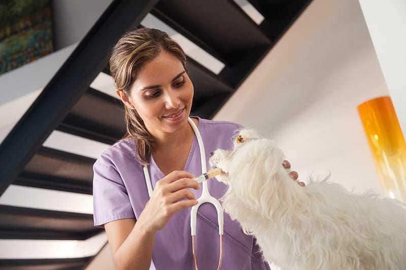 Przeziębienie u psa leczenie
