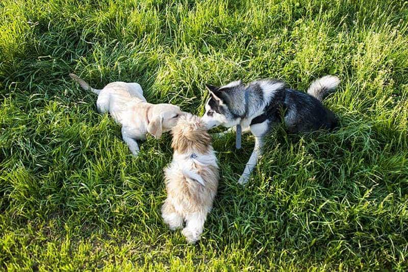 Sposoby komunikowania się zwierząt