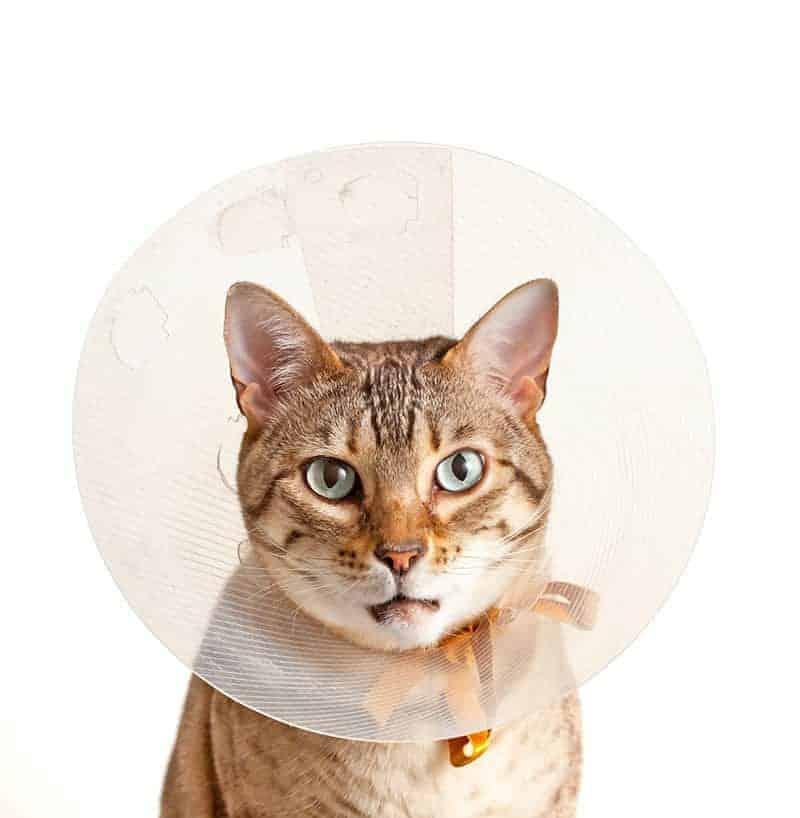 Przebyte choroby mają wpływ na długość życia kota