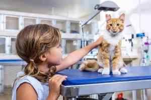 Mocznica u kota: przyczyny, objawy, leczenie i rokowanie przy mocznicy