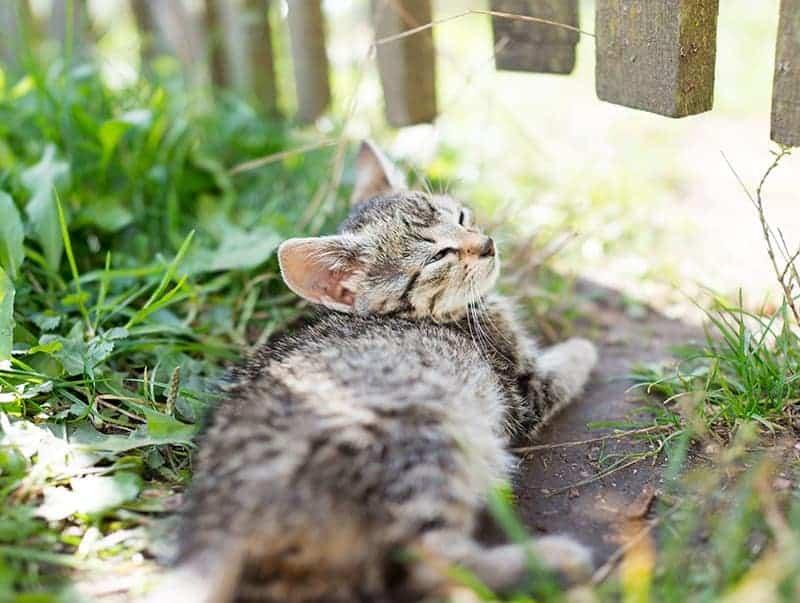 Stłuszczenie wątroby u kota rozpoznanie