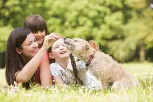 Ile żyją psy?