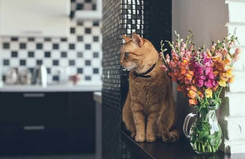 Wielkość przestrzeni życia kota
