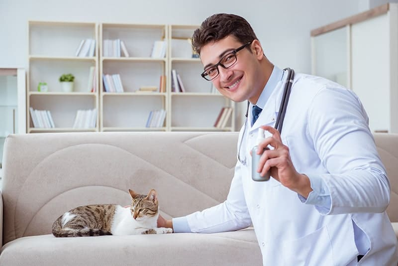 Preparat na pchły dla kota
