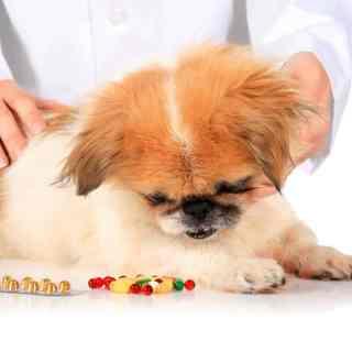 Leki dla psa i kota