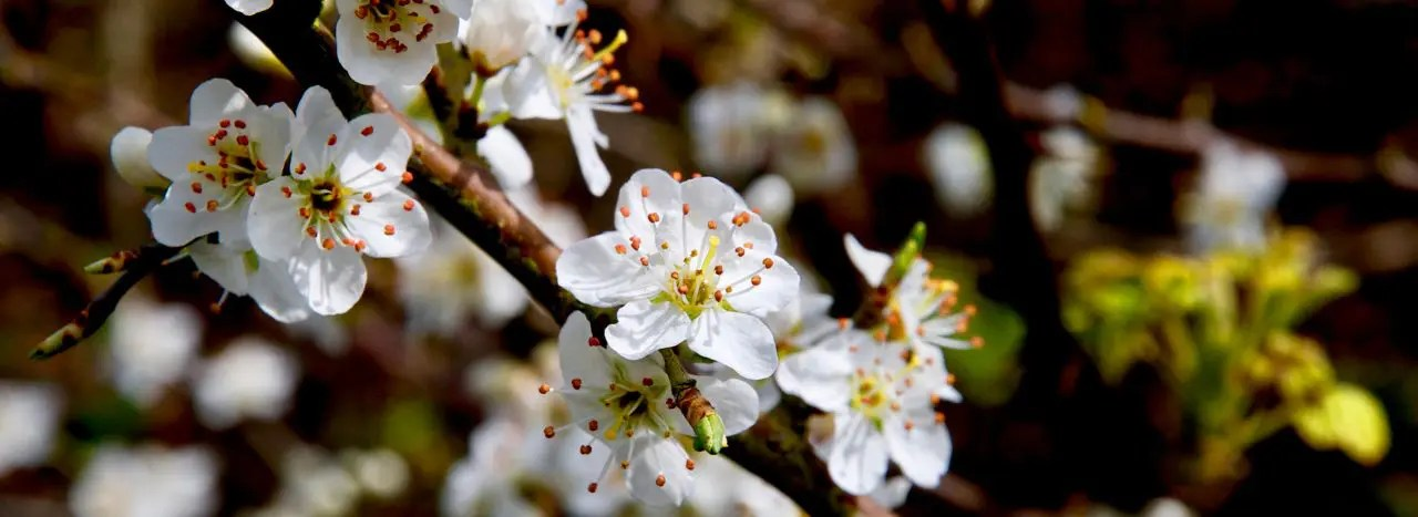 blossom cornwall hypnotherapy primitive instincts