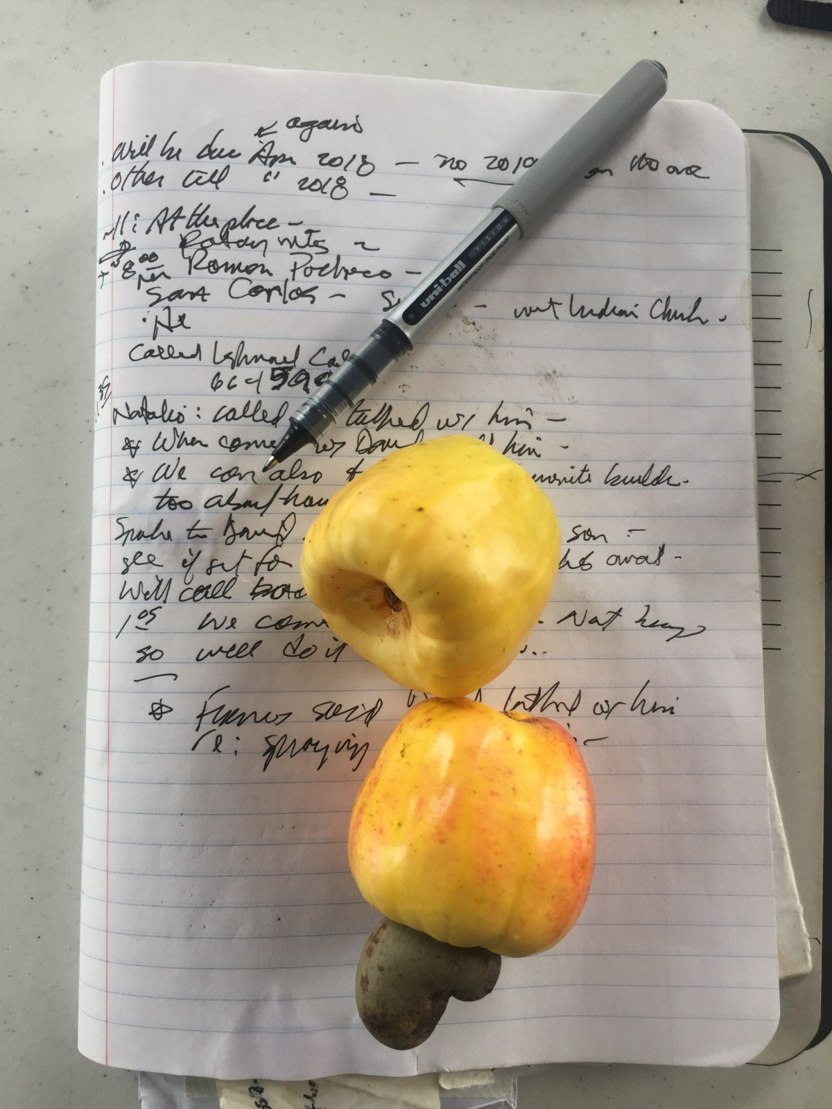 Cashews and GPS track in Belize
