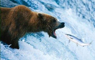 """Catch of the Day"" photo via Tom Mangelsen"