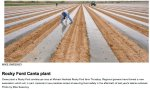 Arkansas Valley cantaloupe planting April 2012 photo via The Pueblo Chieftain