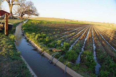 Flood irrigation in the Arkansas Valley via Greg Hobbs