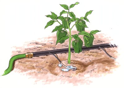 Drip irrigation graphic via Sonoma County Nurseries Resource