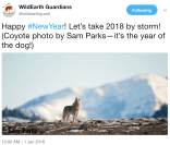 coyotesamparksviawildearthguardians