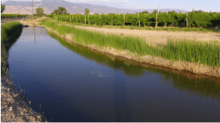 An irrigation ditch on Orchard Mesa in the Grand Valley, bringing water from the Colorado River to orchards and fields. If Colorado fails to send enough water downstream to meet the terms of the Colorado River Compact, could the use of water in ditches such as this be curtailed? Photo credit: Aspen Journalism/Brent Gardner-Smith