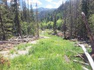 Restored drainage near the Minnie Lynch mine. Photo credit: Trout Unlimited