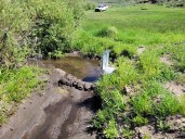 Beaver Creek at Beaver Creek Ditch June 12, 2021. Photo credit: Scott Hummer