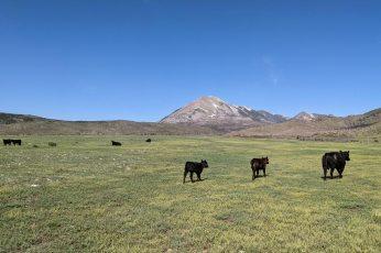 Photo credit: Tony Vorster via Colorado State University